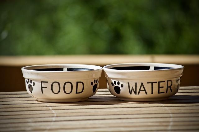misky pro zvířata